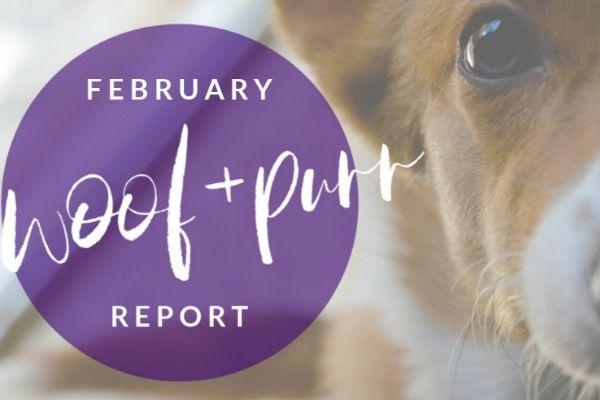 Woof & Purr Report February