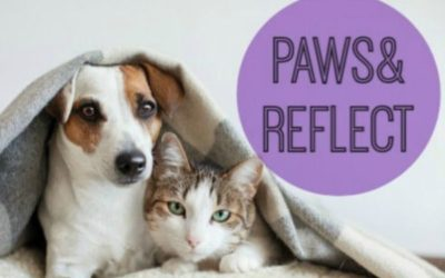 Paws & Reflect 2019