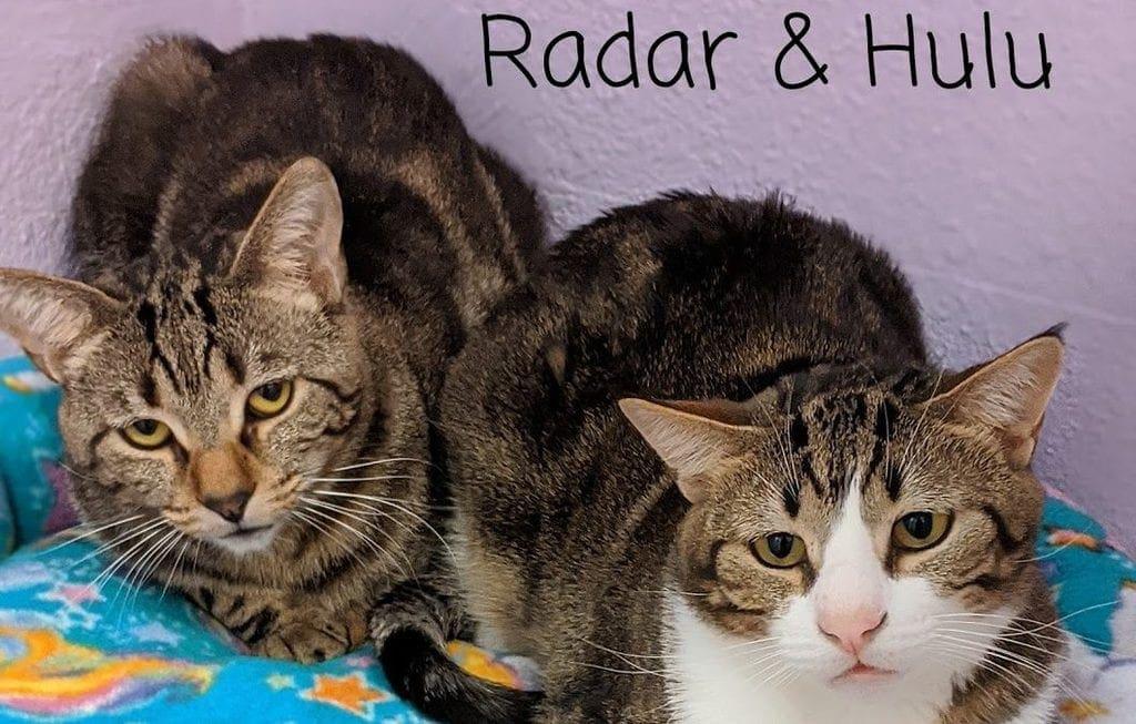 Hulu & Radar – Adoption Pending!