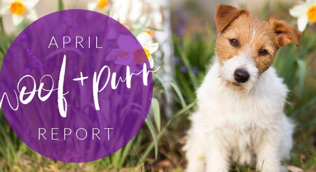 Woof & Purr Report April