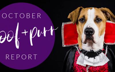 Woof & Purr Report October
