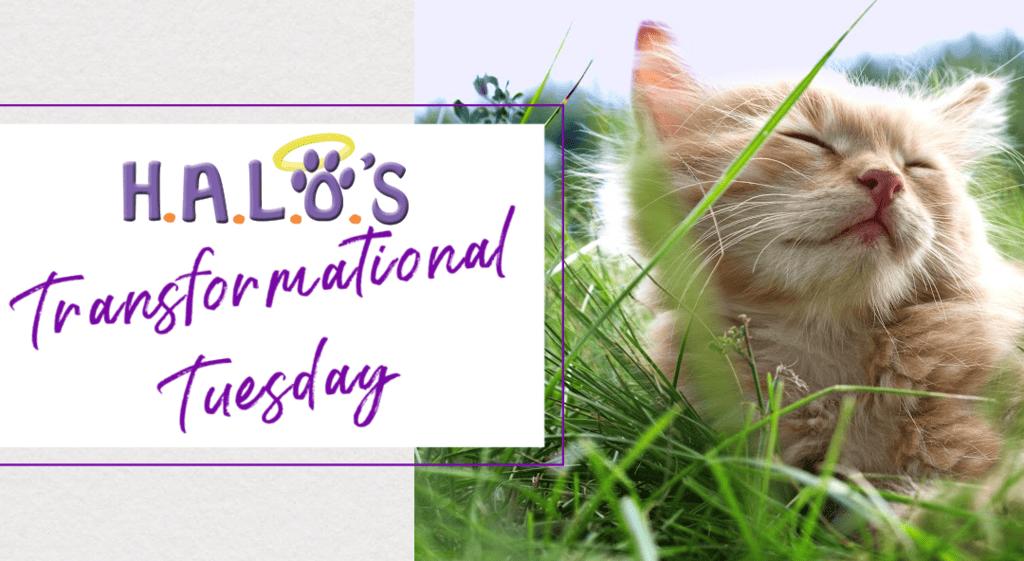 Transformational Tuesdays!